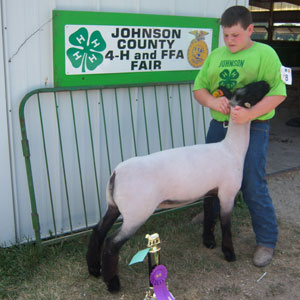 M and E Club Lambs Winner